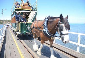 遠離塵囂的南澳維克多港Victor Harbor一日遊